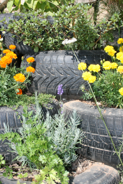 Shy, retiring wall flowersThe ugly tyres soon disappeared under a blanket of flowers.